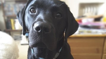 Charlie, the dog who inspired this article on marketing